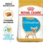 Royal Canin Chihuahua Puppy pour chiot