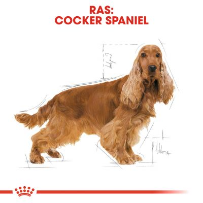 Royal Canin Cocker Spaniel Adult - Hondenvoer