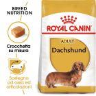 Royal Canin Dachshund Adult Crocchette per cani