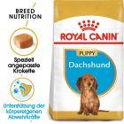 Royal Canin Dachshund Junior pour chiot