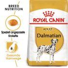 Royal Canin Dalmatian Adult pour chien