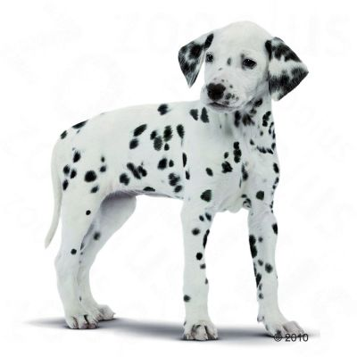 Royal Canin Dalmatian Junior/Puppy