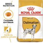 Royal Canin Dalmatien Adult