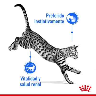 Royal Canin Indoor Sterilised 7+ en gelatina