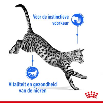 Royal Canin Indoor Sterilised 7+ in Gelei Kattenvoer