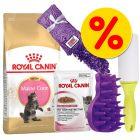 Royal Canin Kattenvoer - Maine Coon Kitten Pakket