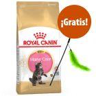 Royal Canin 10 kg pienso para gatos + Caña con plumas de juguete ¡gratis!