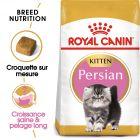 Royal Canin Kitten Persian pour chaton