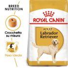Royal Canin Labrador Retriever Adult Crocchette per cani
