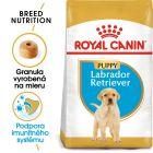Royal Canin Labrador Retriever Puppy