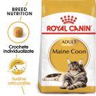 Royal Canin Maine Coon Adult Hrană uscată
