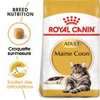 Royal Canin Maine Coon Adult pour chat