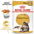 Royal Canin Maine Coon i sauce