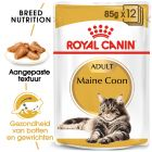 Royal Canin Maine Coon - Kattenvoer