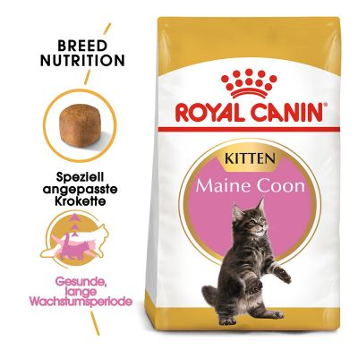 Royal Canin Maine Coon Kitten pour chaton