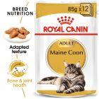 Royal Canin Maine Coon nedvestáp