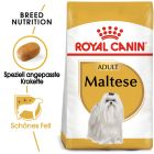 Royal Canin Maltese Adult pour chien