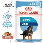 Royal Canin Maxi Puppy comida húmida para cães