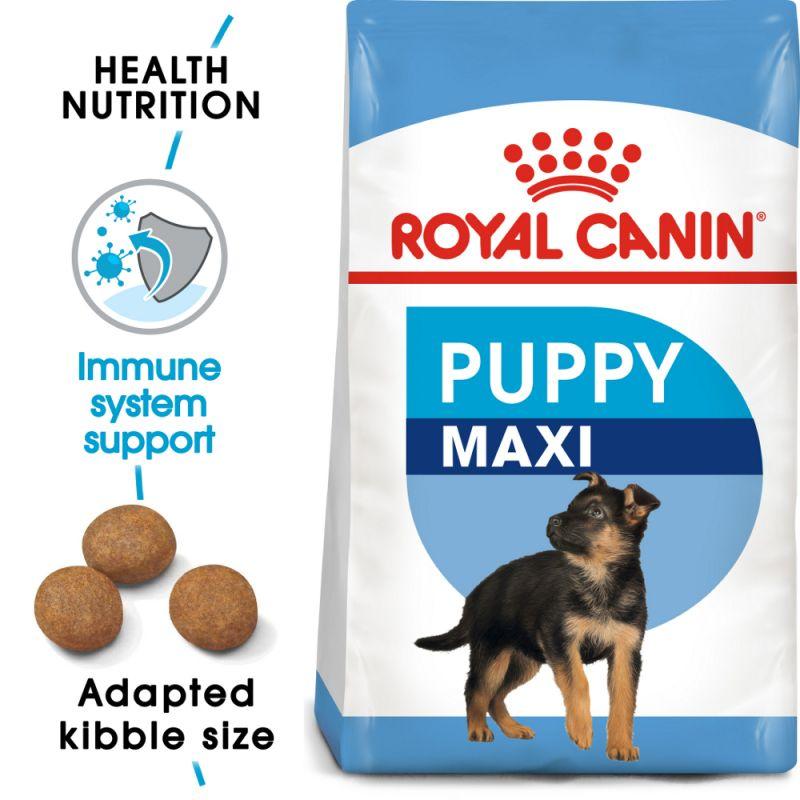 puppy trebuie să piardă în greutate bj penn pierdere în greutate