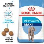 Royal Canin Maxi Puppy / Junior Active pour chiot