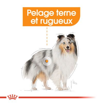 Royal Canin Mini Coat Care pour chien