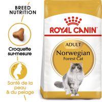 Royal Canin Norvégien Adult pour chat