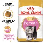 Royal Canin Persan Kitten pour chaton