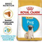 Royal Canin Pug Junior pour chiot