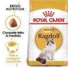 Royal Canin Ragdoll Adult