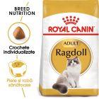 Royal Canin Ragdoll Adult Hrană uscată
