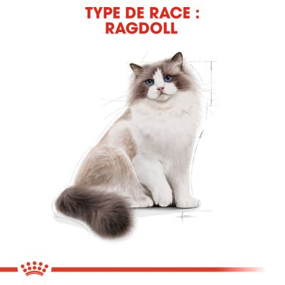 Royal Canin Ragdoll Adult pour chat