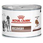 Royal Canin Recovery Veterinary Diet latas para cães e gatos