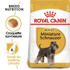 Royal Canin Schnauzer Nain Adult pour chien