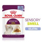 Royal Canin Sensory Smell in Gelatina Alimento umido per gatti