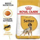 Royal Canin Setter Adult pour chien