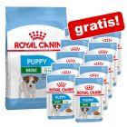 Royal Canin  Size droogvoer + natvoer gratis!