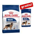 Royal Canin Size, karma sucha + pasująca karma mokra gratis!