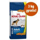 Royal Canin Size 18 kg en oferta: 15 + 3 kg ¡gratis!