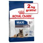 Royal Canin Size 12 kg/15 kg em promoção: 2 kg grátis!