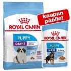 Royal Canin Size -kuivaruoka pennulle + sopiva märkäruoka kaupan päälle!