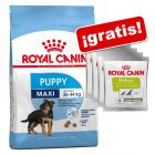 Royal Canin Size Puppy 8 / 15 kg pienso + 4 snack Royal Canin ¡gratis!