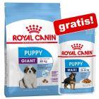 Royal Canin Size torrfoder + passande våtfoder på köpet!