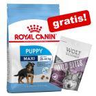 """Royal Canin Size + Wolf of Wilderness """"Wild Bites"""" med lam på kjøpet!"""