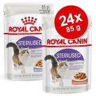 Royal Canin -säästöpakkaus 24 x 85 g: Jelly + Gravy