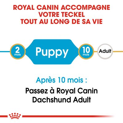 Royal Canin Teckel Puppy pour chiot