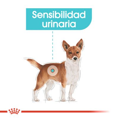 Royal Canin Urinary Care comida húmida para cães