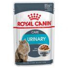Royal Canin Urinary Care i sauce