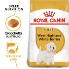 Royal Canin West Highland White Terrier Adult Crocchette per cani