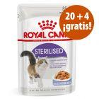 Royal Canin 24 x 85 g en oferta: 20 + 4 sobres ¡gratis!