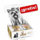 Royal Canin Yorkshire Terrier Adult - Pack de prueba